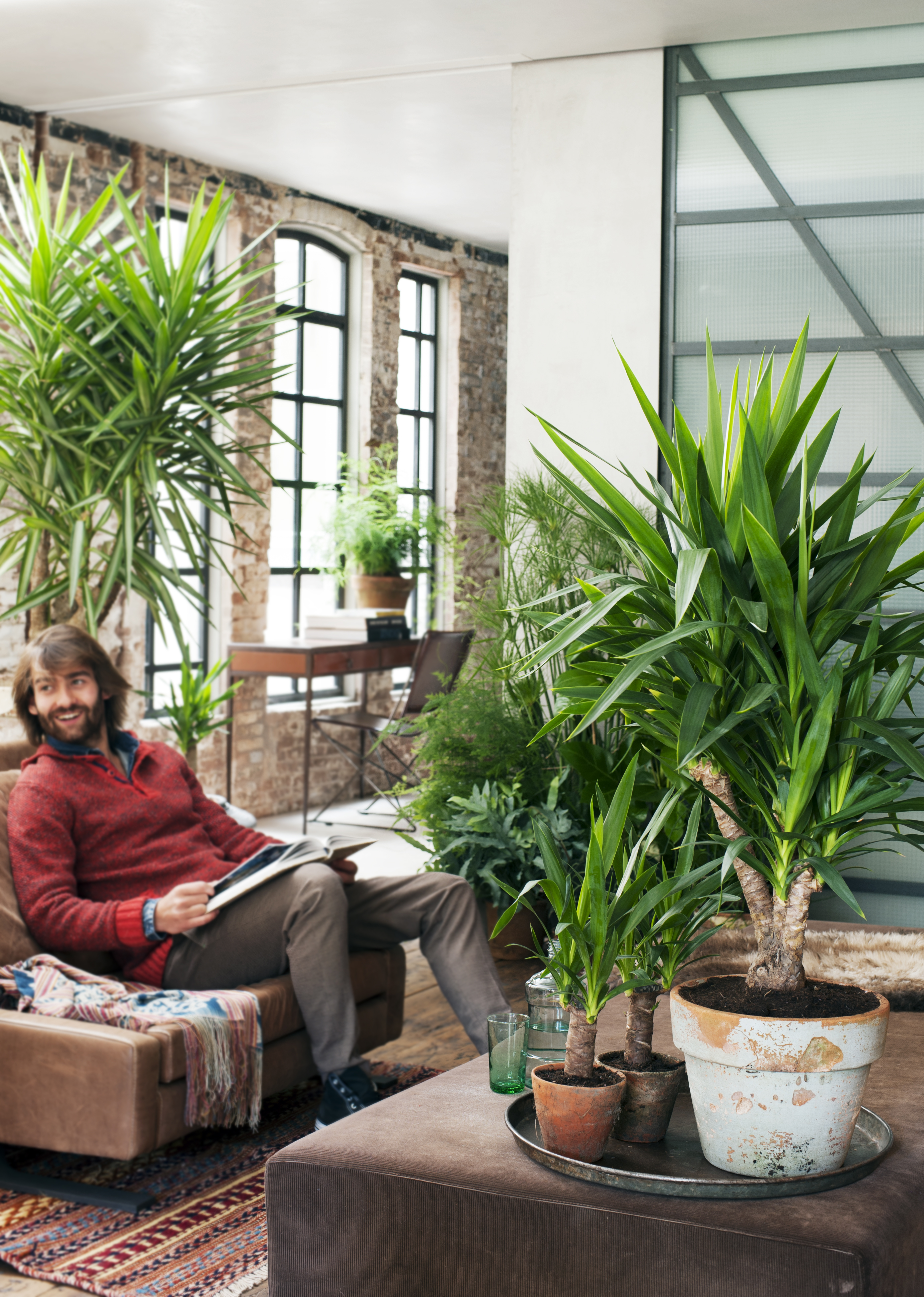 Januari 2015 yucca is woonplant van de maand bloemenbureau for Yucca wohnzimmer