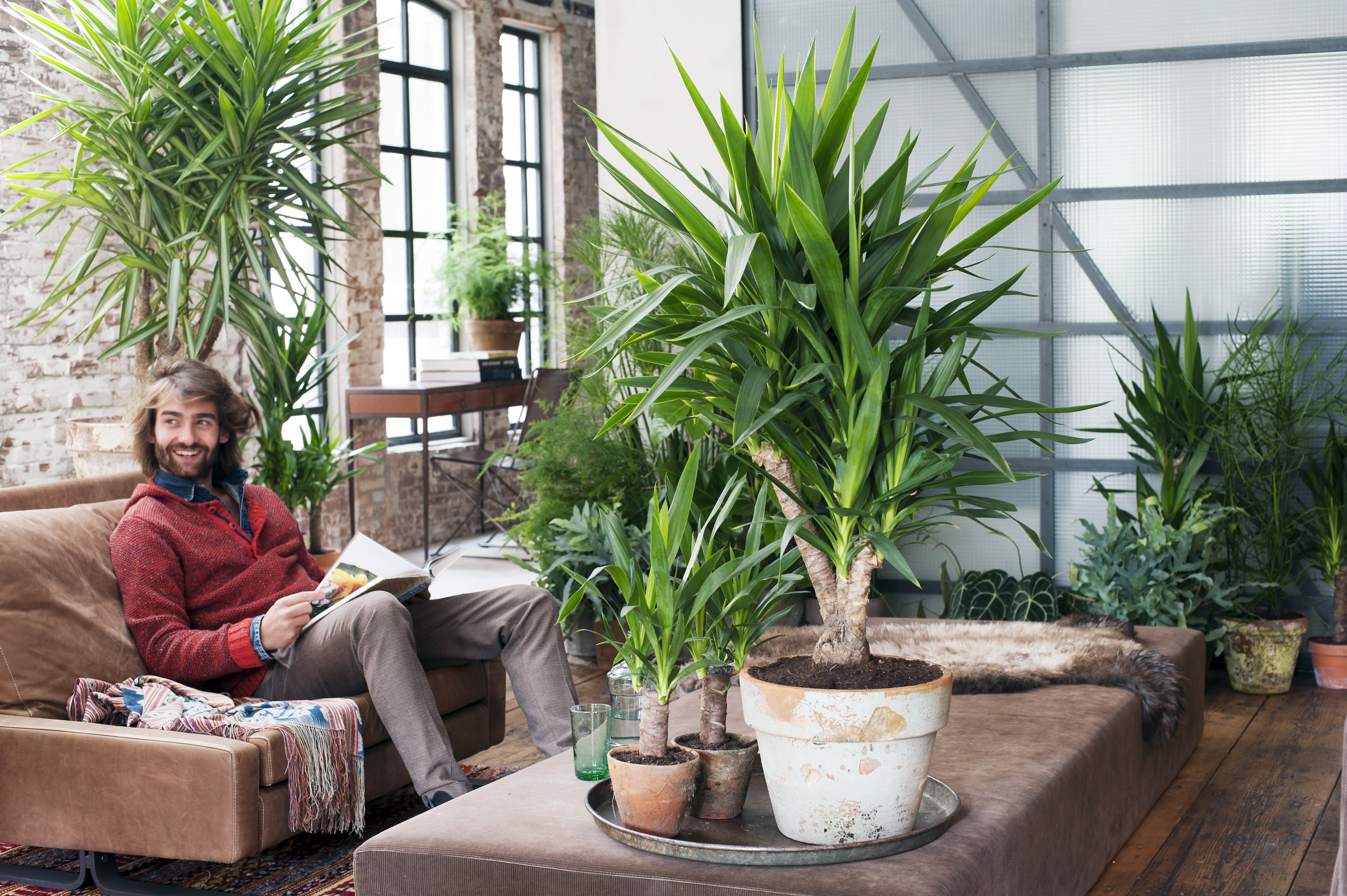 Januari 2015 yucca is woonplant van de maand bloemenbureau for Plante exotique exterieur rustique