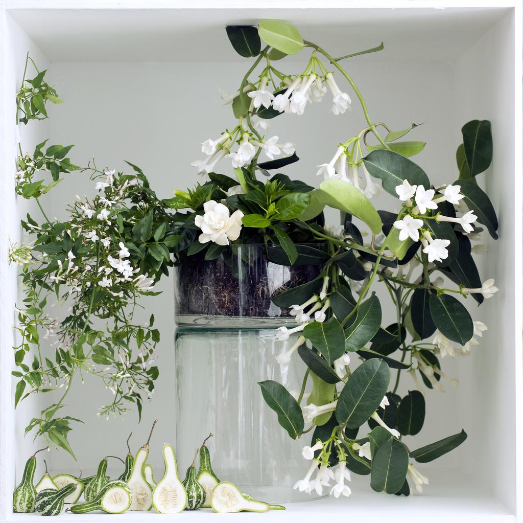 Genoeg Witte geurende planten: Woonplanten van de maand maart | Bloemenbureau #LF99