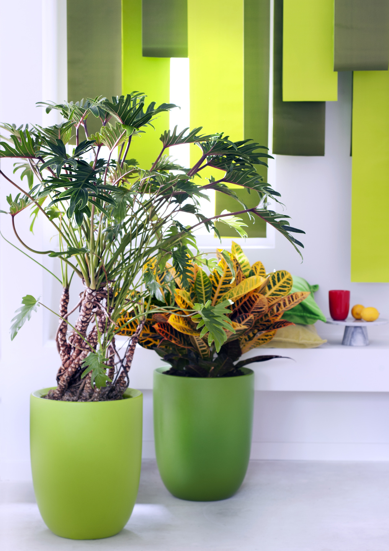 mannenplanten woonplanten van de maand juni 2017. Black Bedroom Furniture Sets. Home Design Ideas