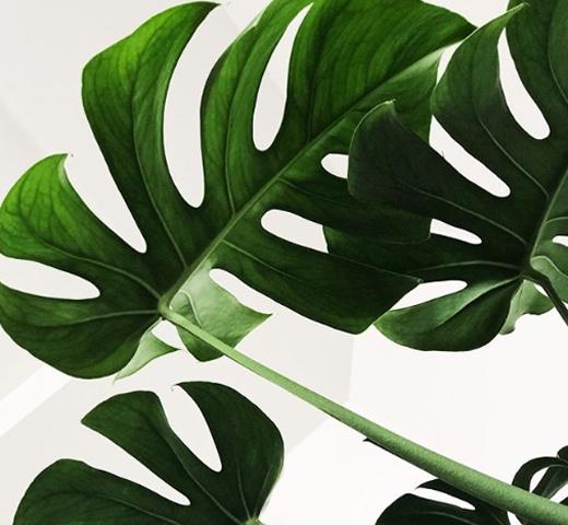 Instagram-account Ma plante, mon bonheur op shortlist
