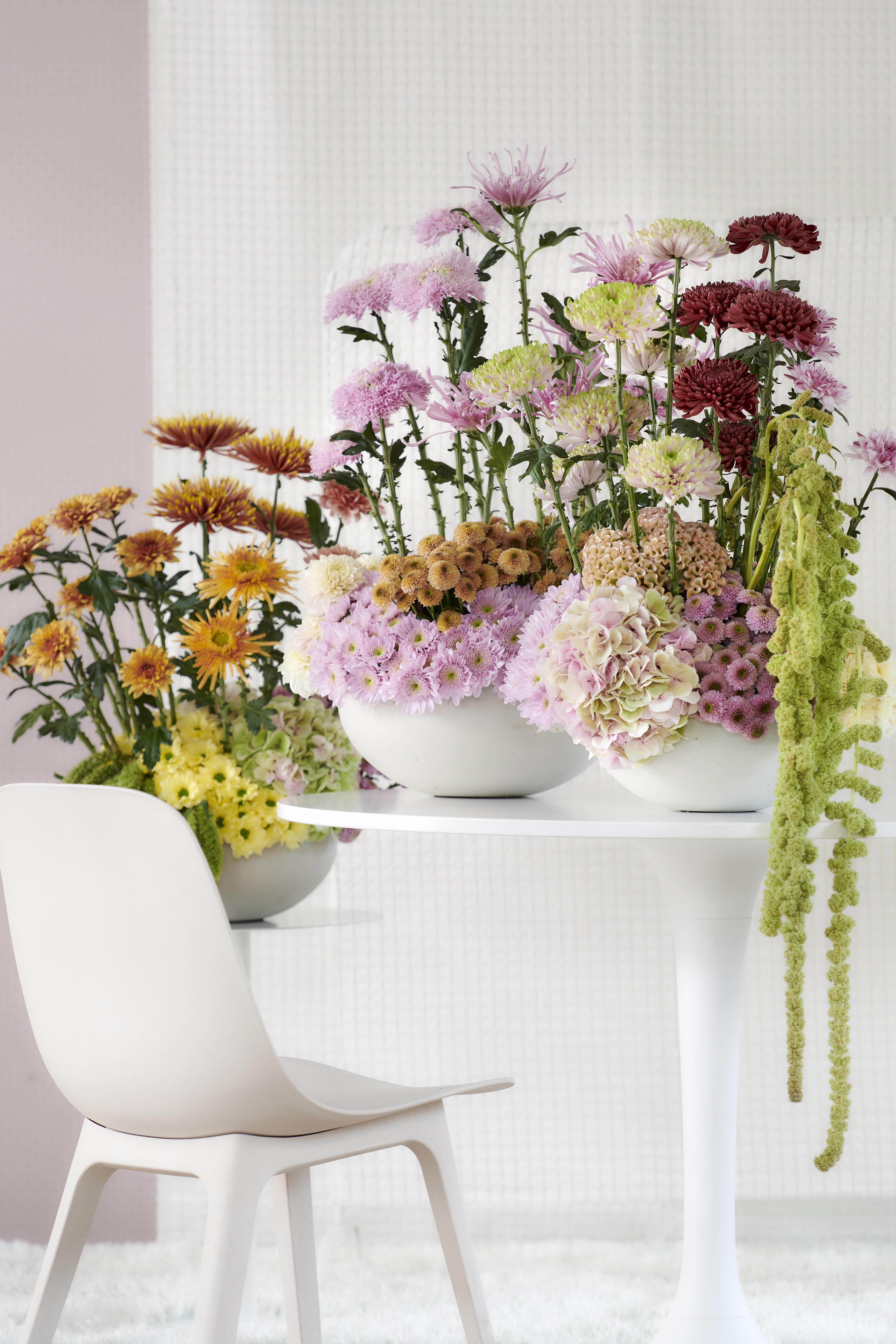 Chrysant staat in oktober op de Bloemenagenda