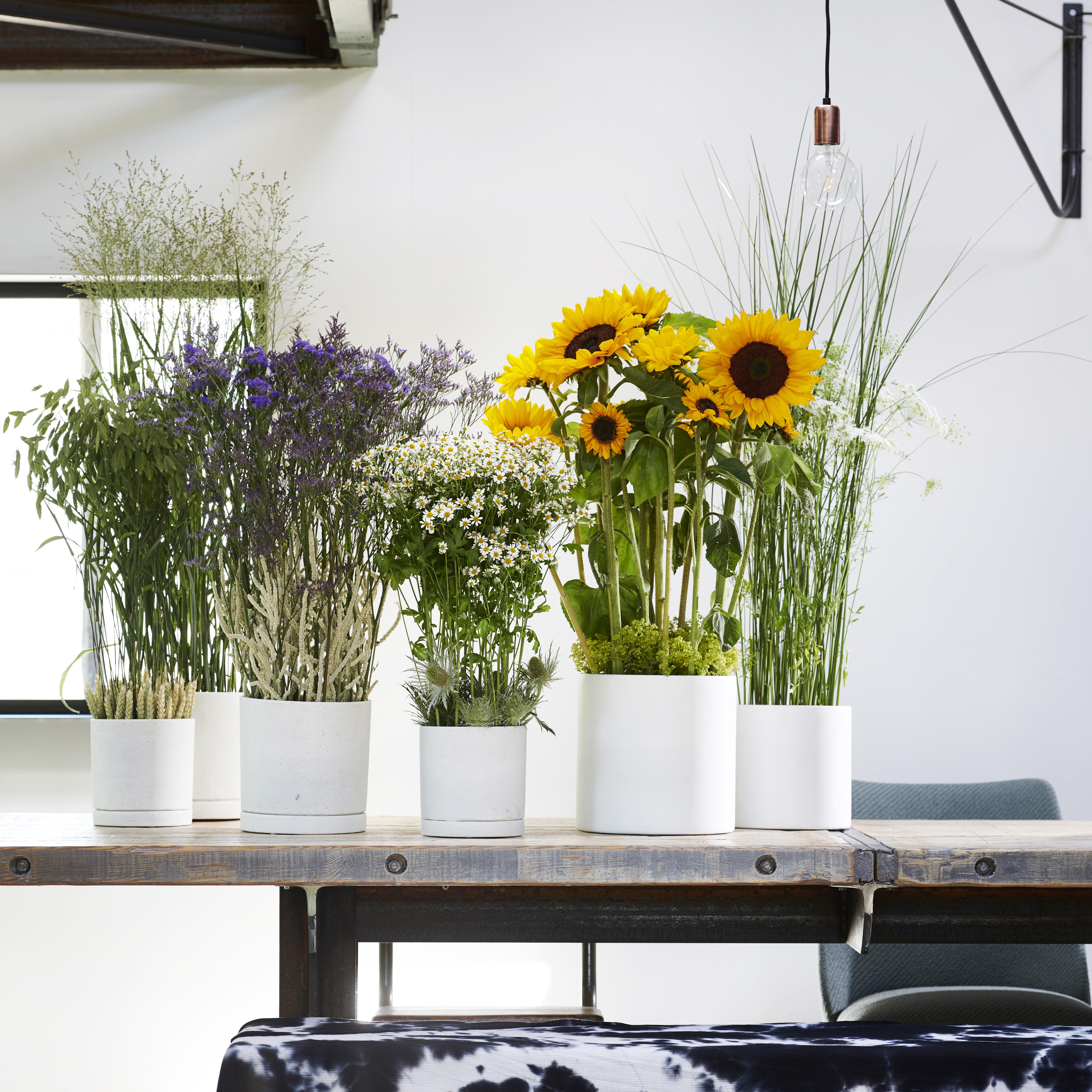 Zomerbloemen staan in juli op de Bloemenagenda