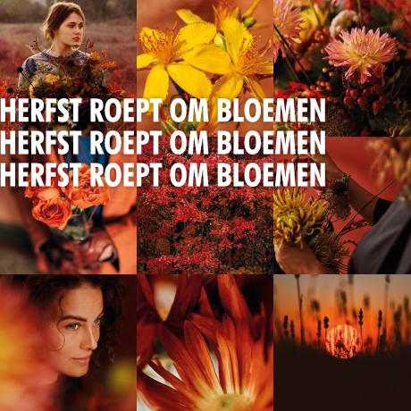 Herfst roept om bloemen campagnebeeld