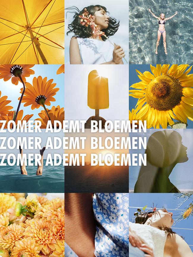 Zomer Ademt Bloemen - Celebrate Seasons