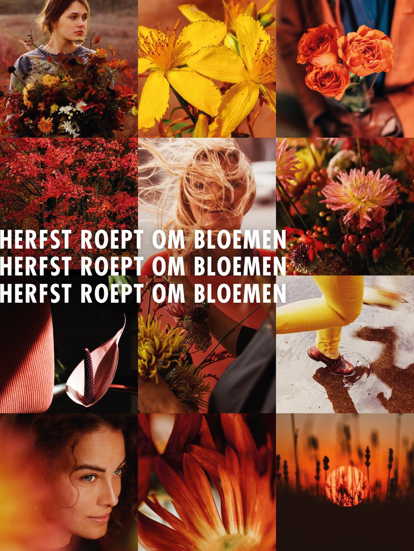 Contentcampagne Herfst roept om bloemen