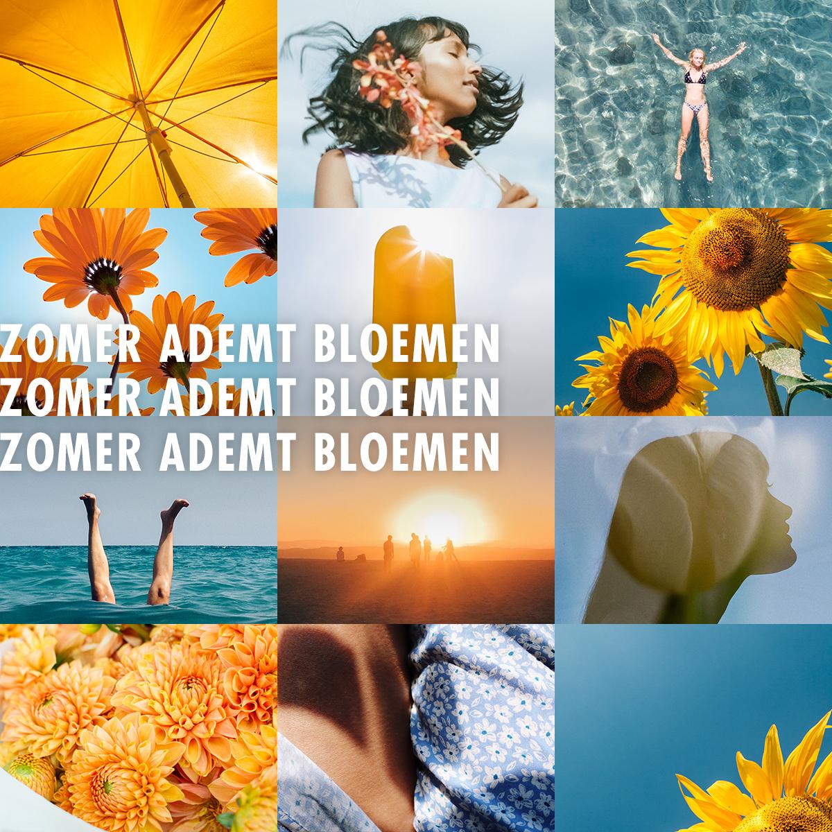 Zomer ademt bloemen 2020 - Mooiwatbloemendoen.nl