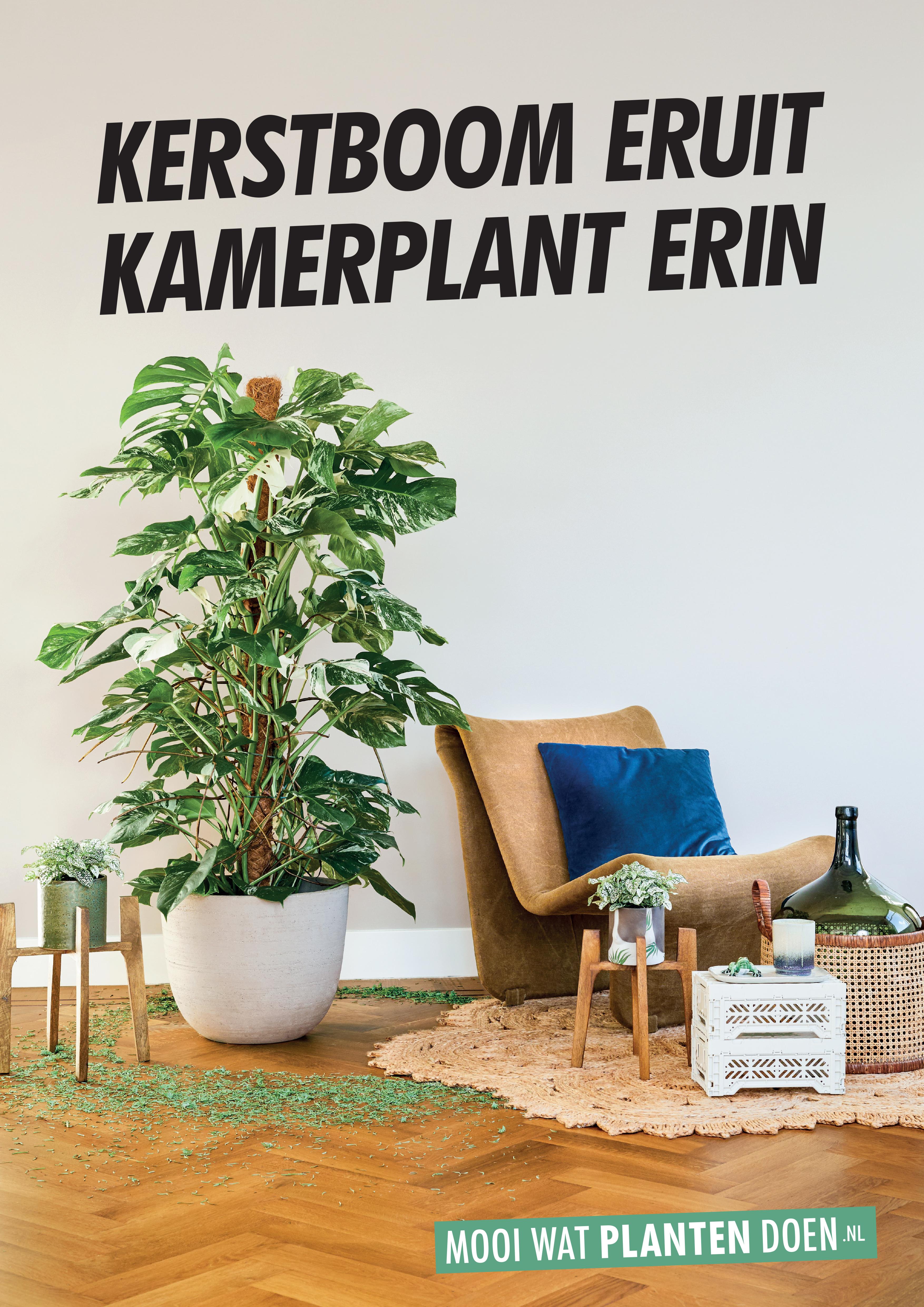 Kerstboom Eruit Kamerplant Erin Anno 2019 Bloemenbureau
