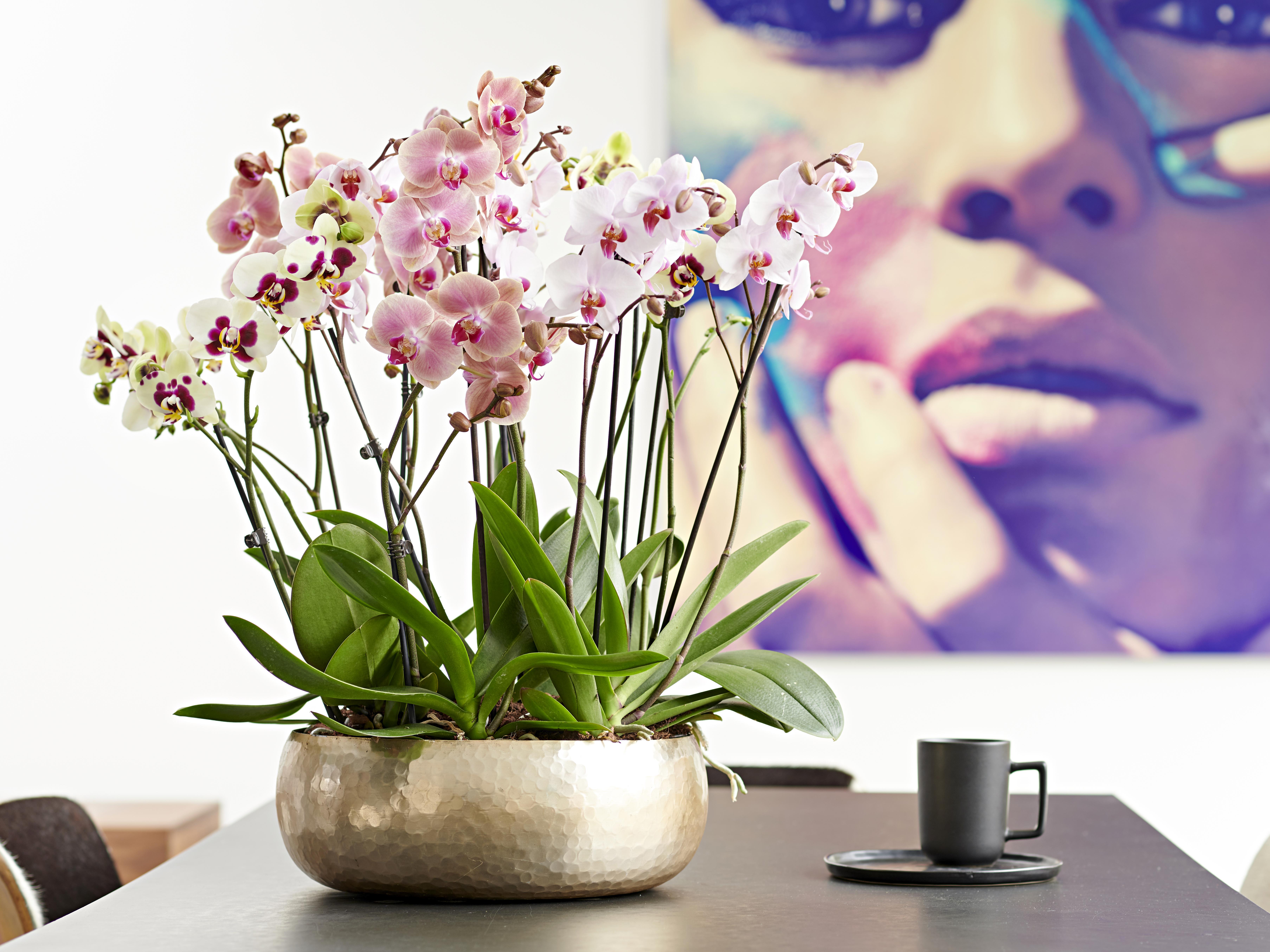 Shopper activatie voor orchideeën bij Aldi Süd, Duitsland