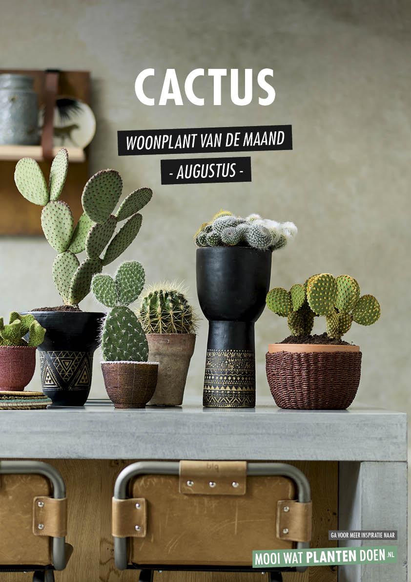 Cactus: Woonplant van de Maand augustus 2020