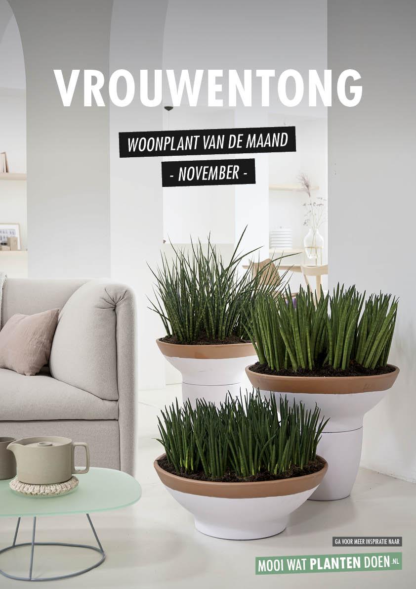 Vrouwentong: Woonplant van de Maand november 2020