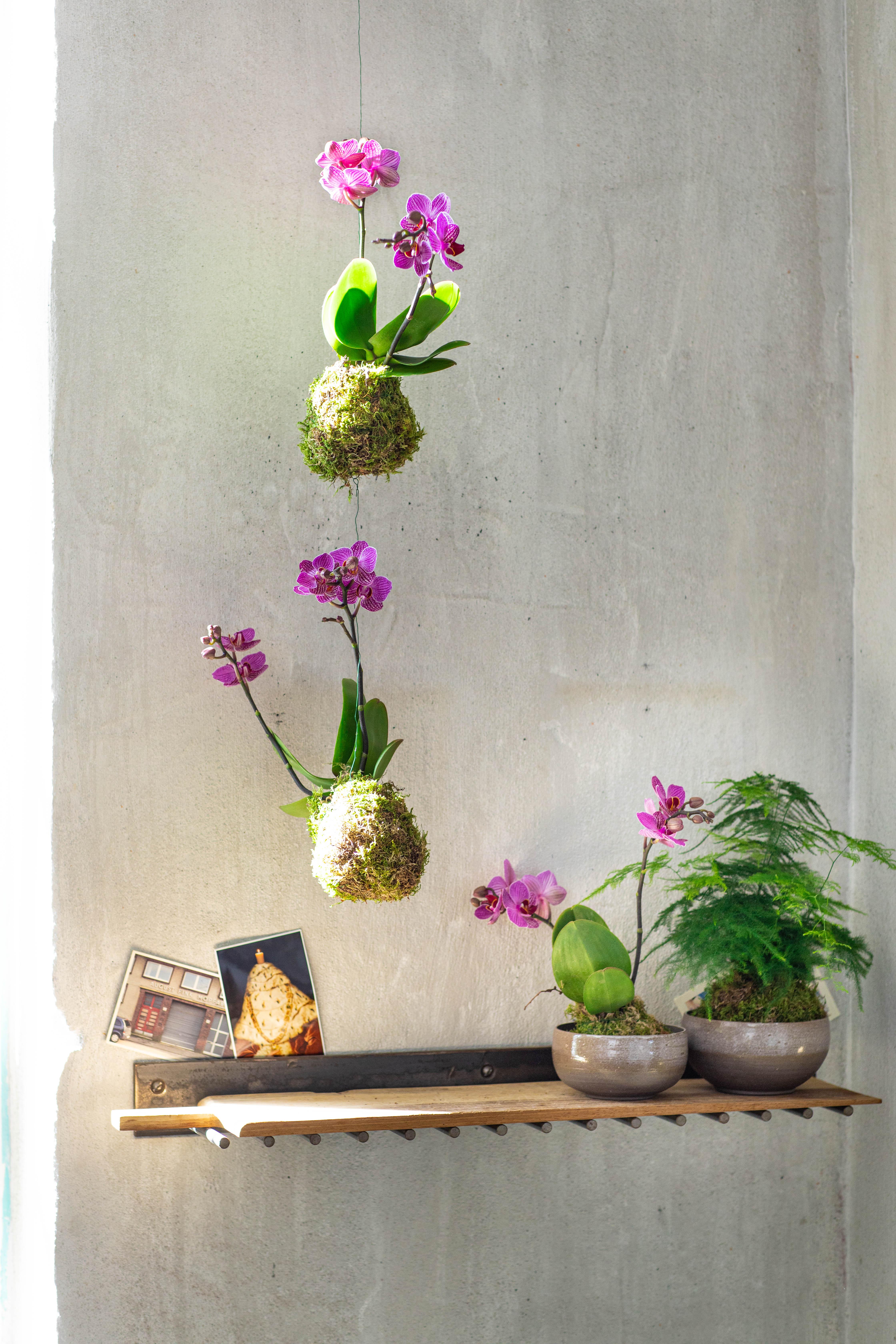 Orchidee-shopper activatie met Blume2000