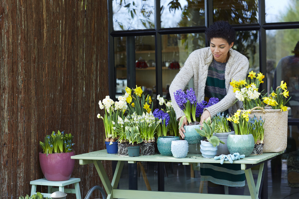 Tuinplant Van De Maand Februari Voorjaarsbollen Op Pot Bloemenbureau