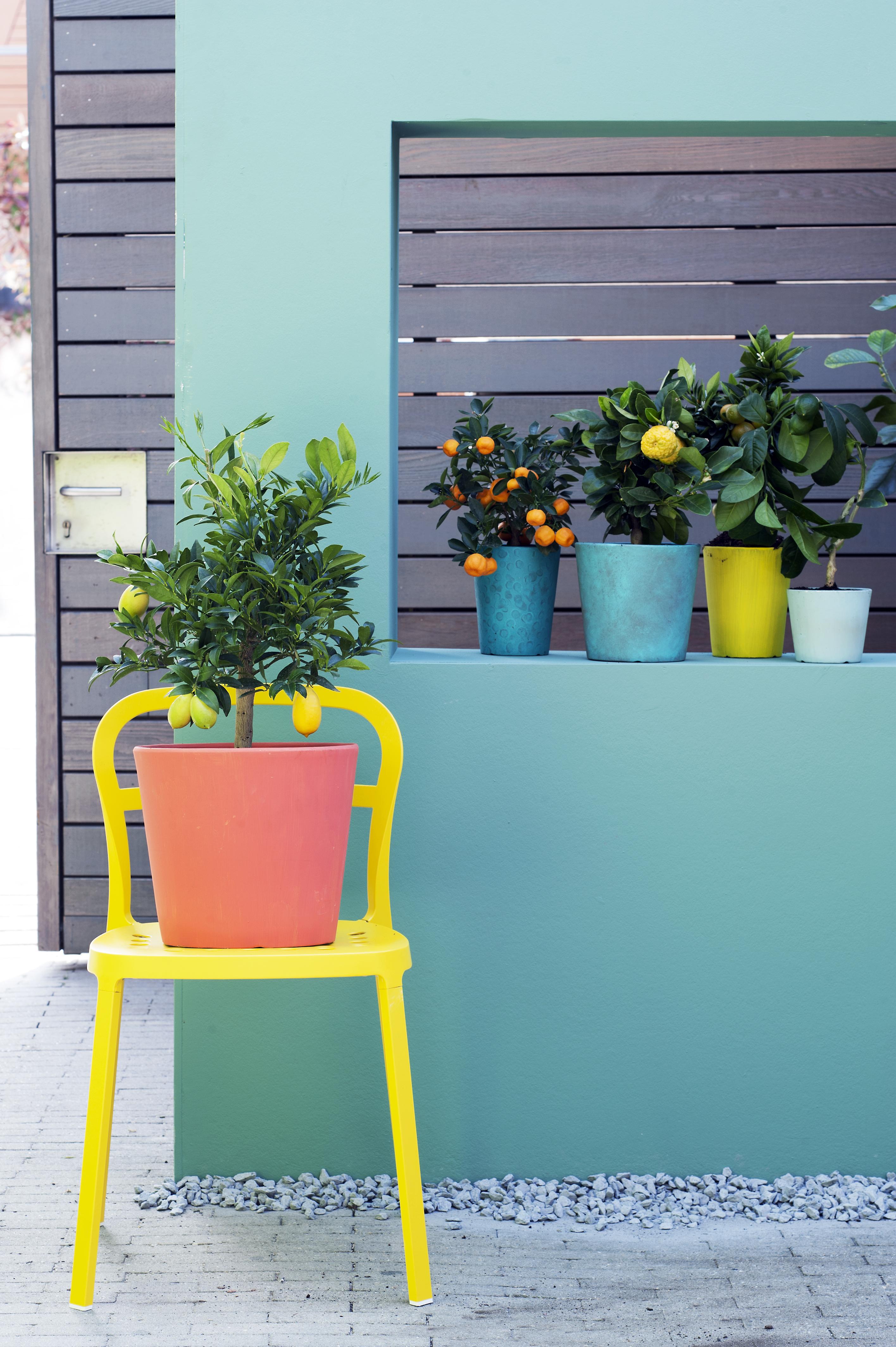 Tuinplant van de Maand maart: Citrusboompjes