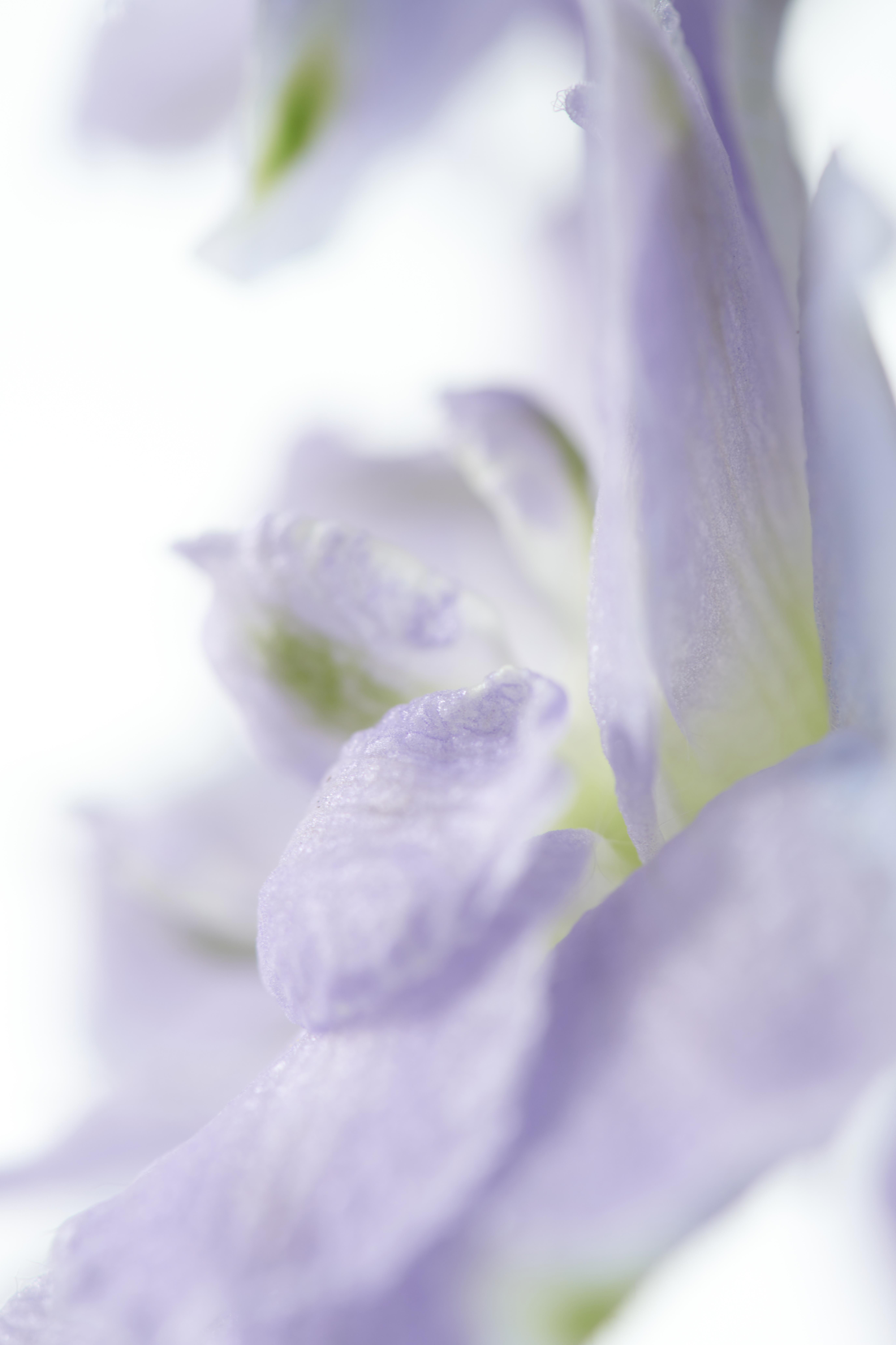 delphinium_trend collectie 2021 lente zomer