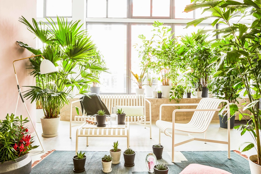 woonplanten van de maand bij lys vintage in hamburg bloemenbureau. Black Bedroom Furniture Sets. Home Design Ideas