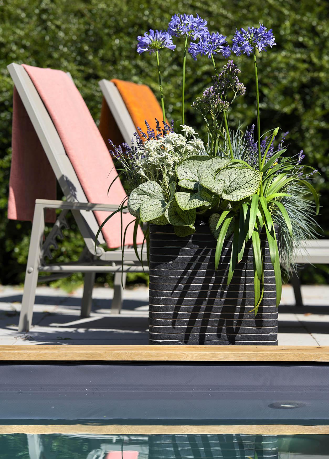 Plantes pour abeilles - Cool
