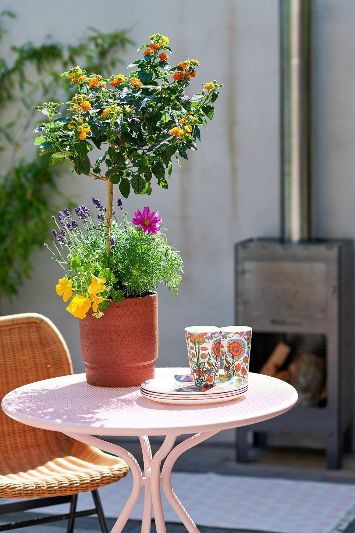 Plantes pour abeilles - Petit plaisir
