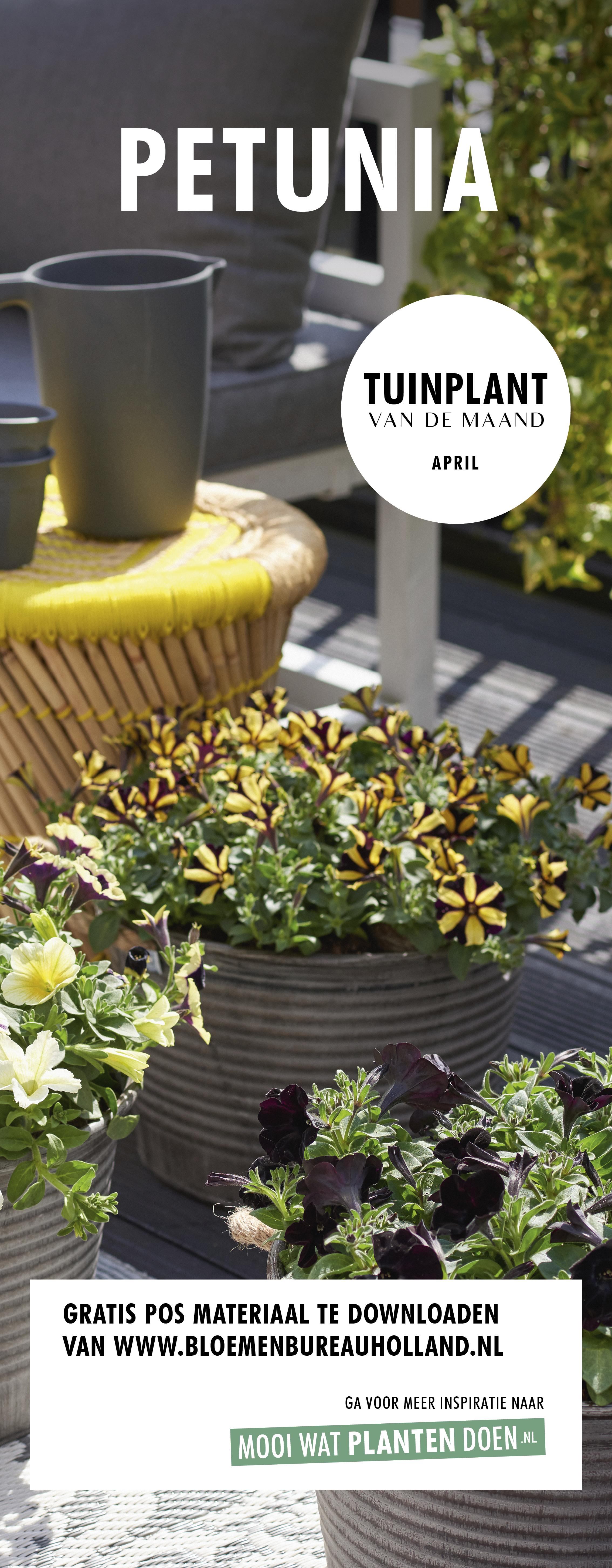 Tuinplant van de Maand april: Petunia