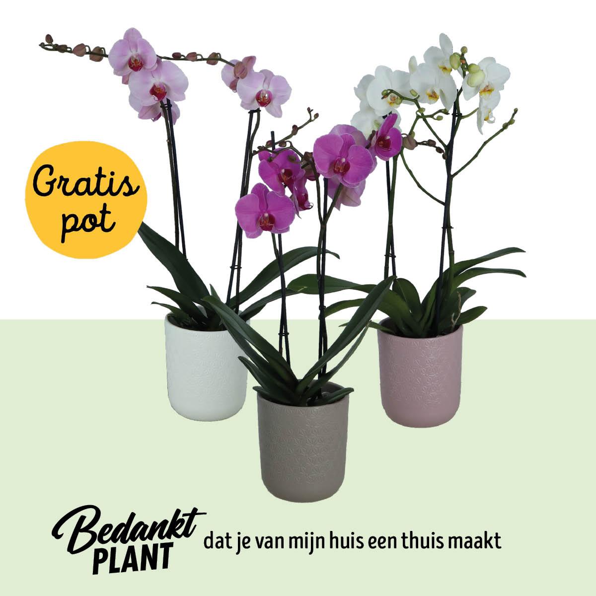 Shopper activatie orchideeën bij Jumbo