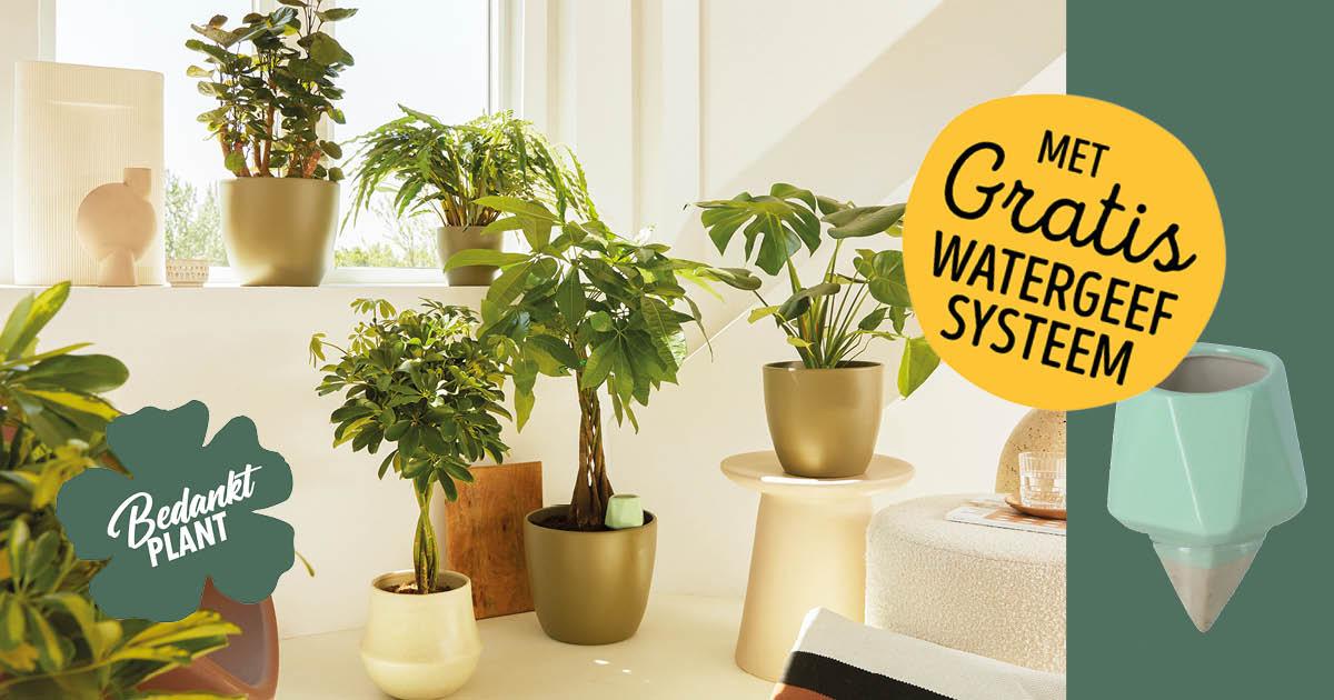 Bedankt Plant shopper activatie bij Jumbo