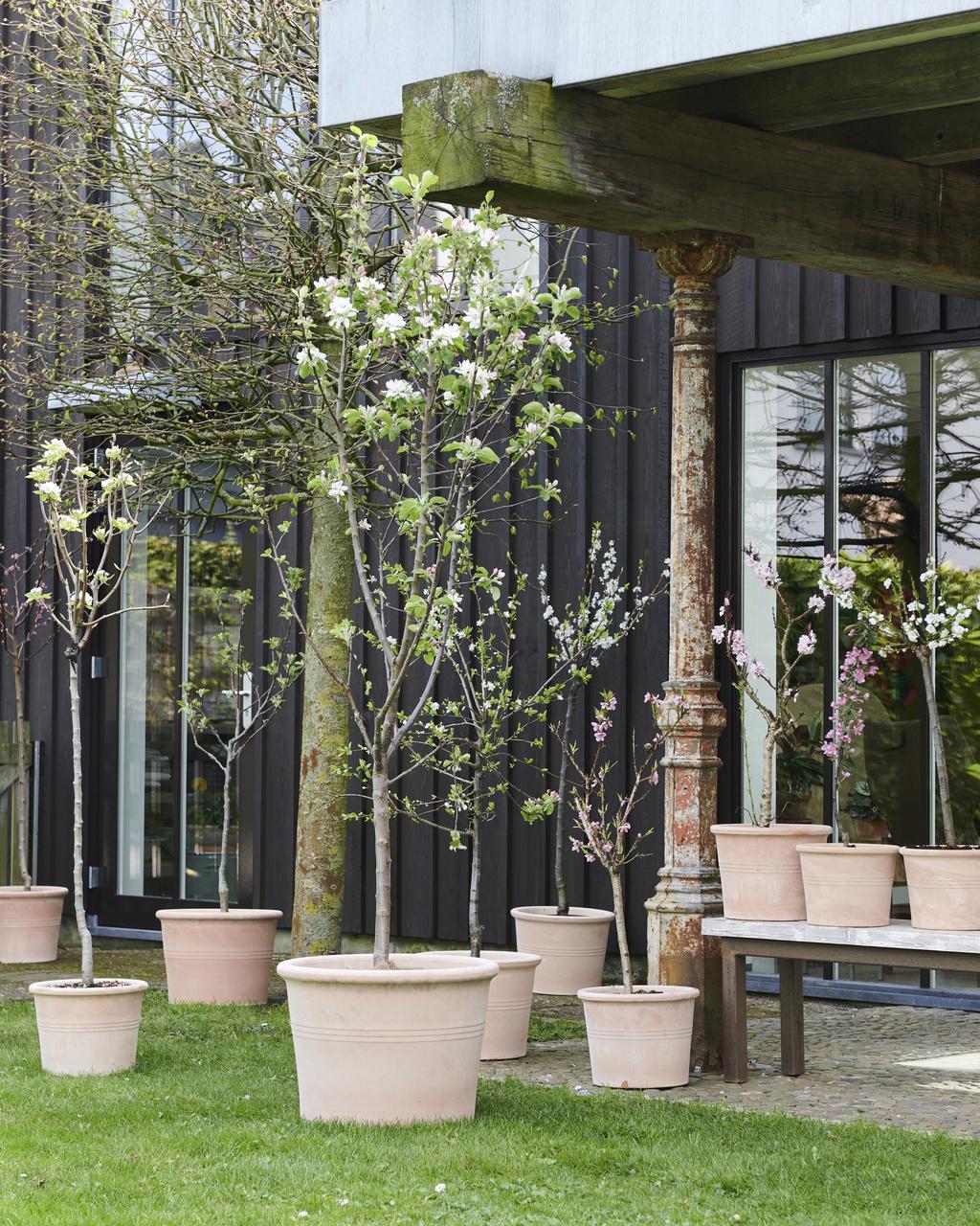 Bloesembomen: Tuinplanten van de maand maart
