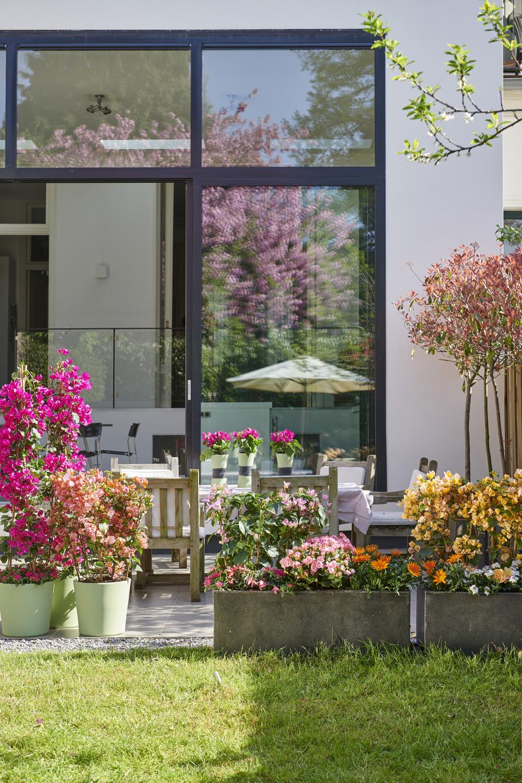 Kleurbrengers: tuinplanten van de maand april