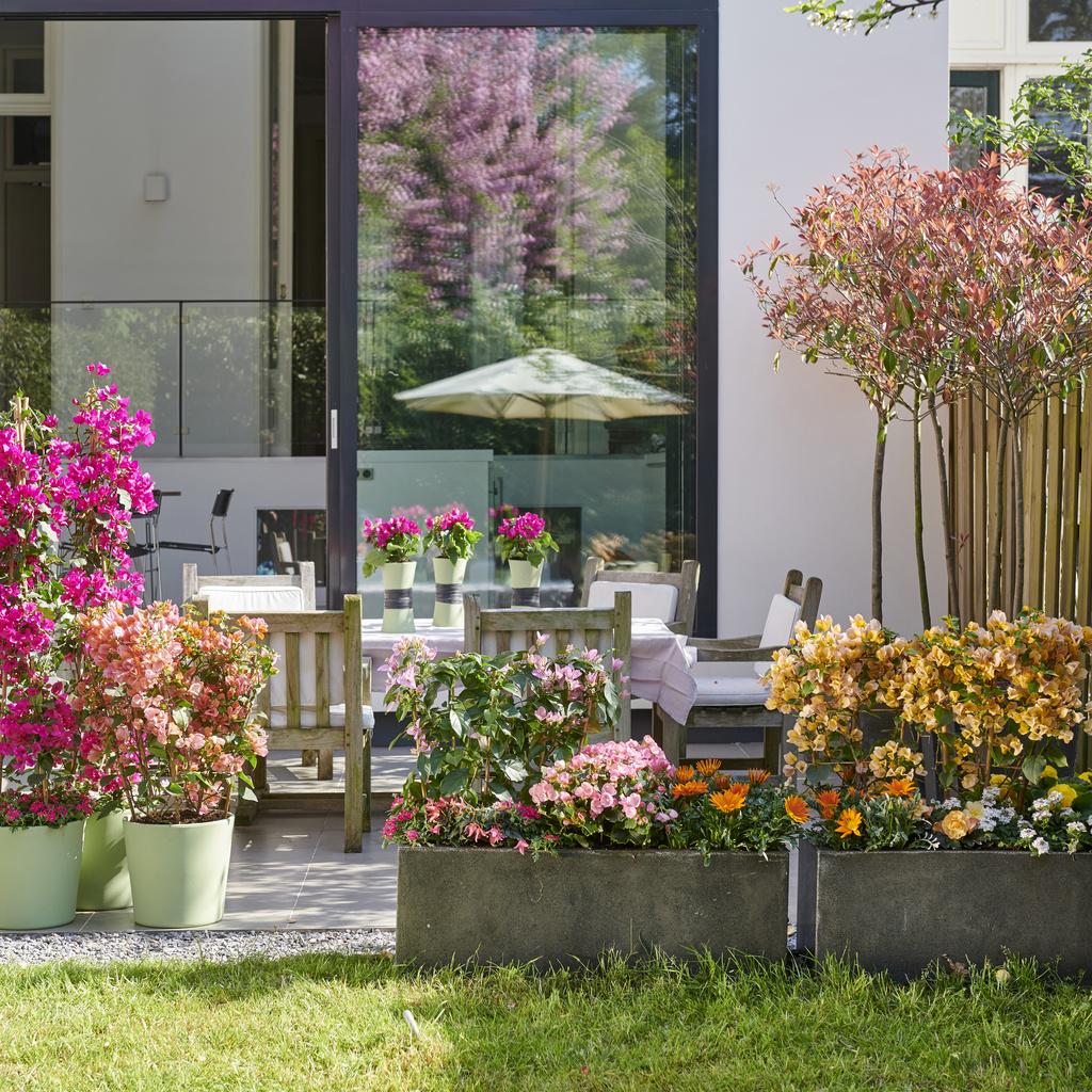 Plantes de jardin du mois, avril : Festival de couleurs