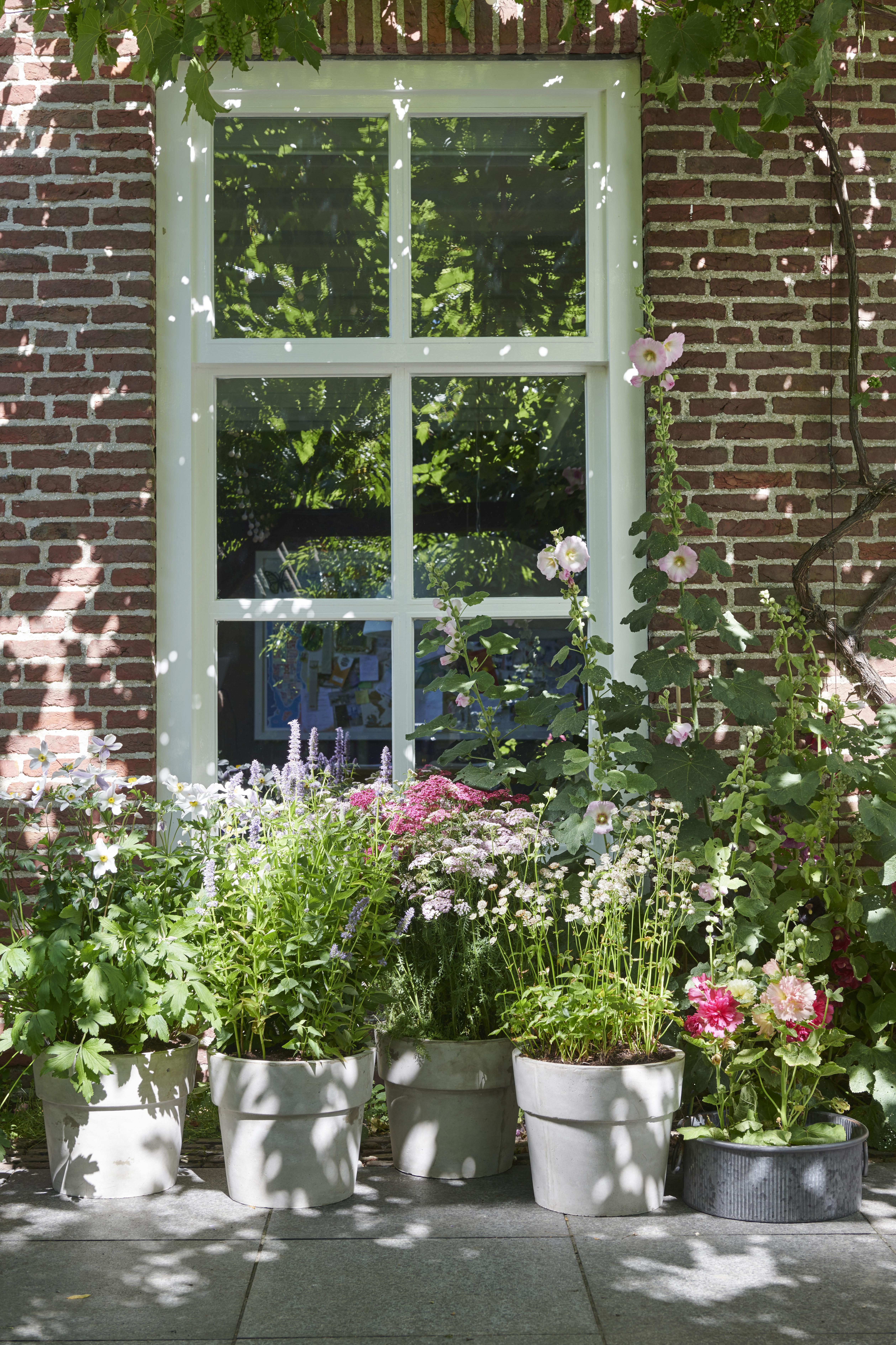 Bijenvrienden: Tuinplanten van de maand juli