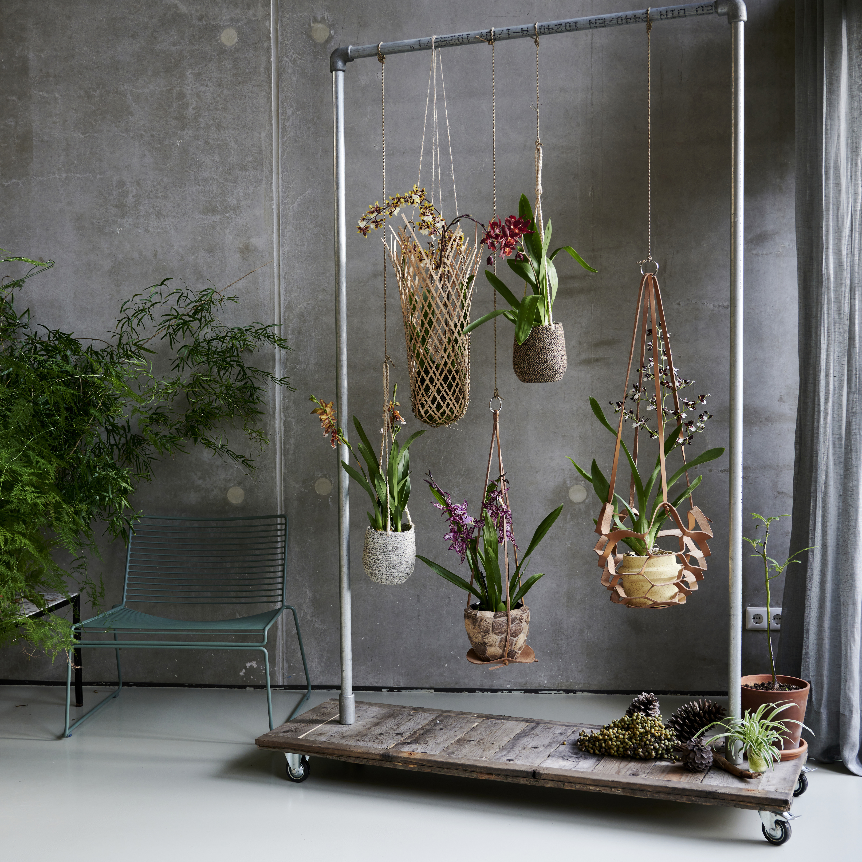 De Trend Collectie herfst/winter 2021 | Kamerplanten