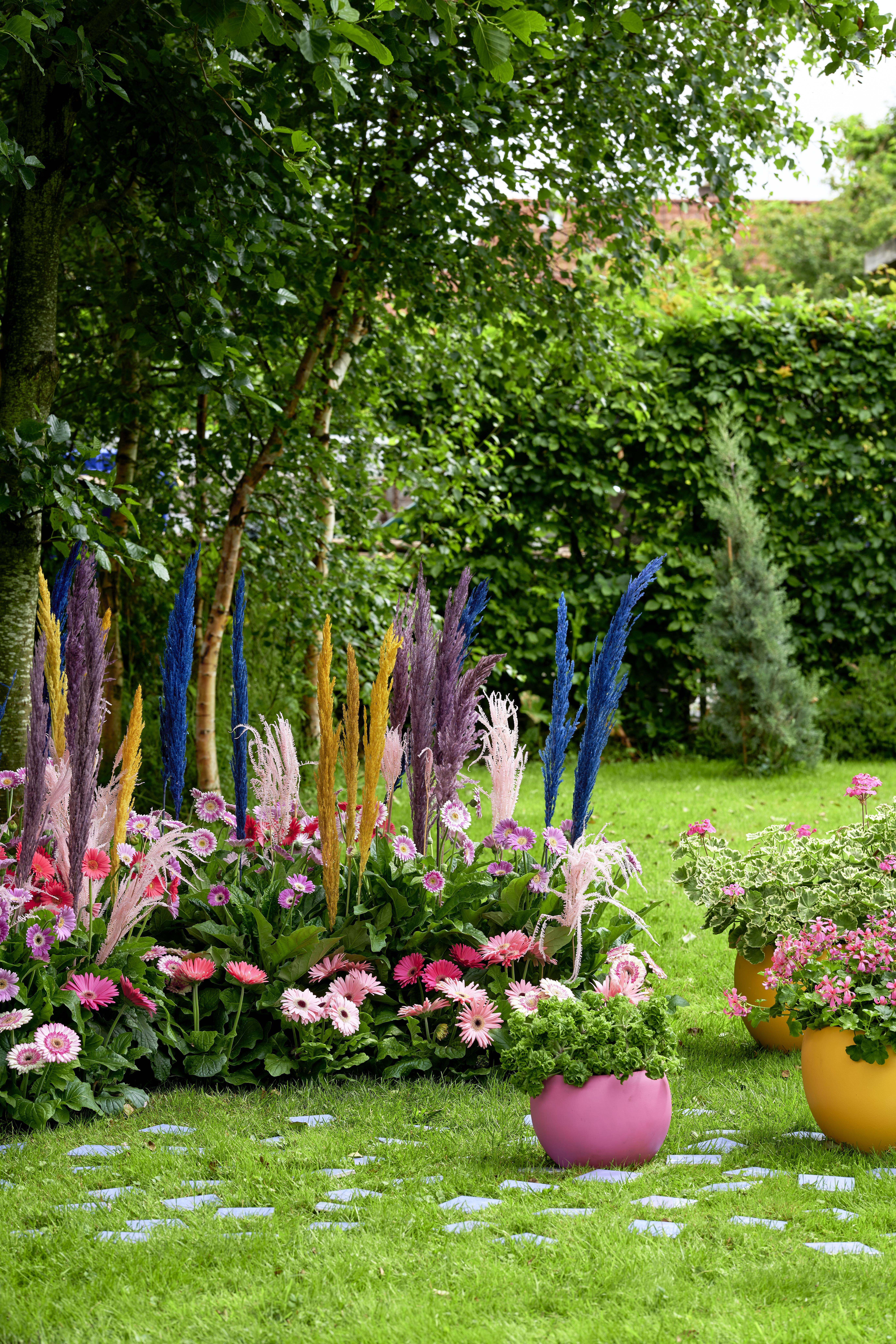 De buitenplanten uit De Trend Collectie lente/zomer 2021 Gerbera