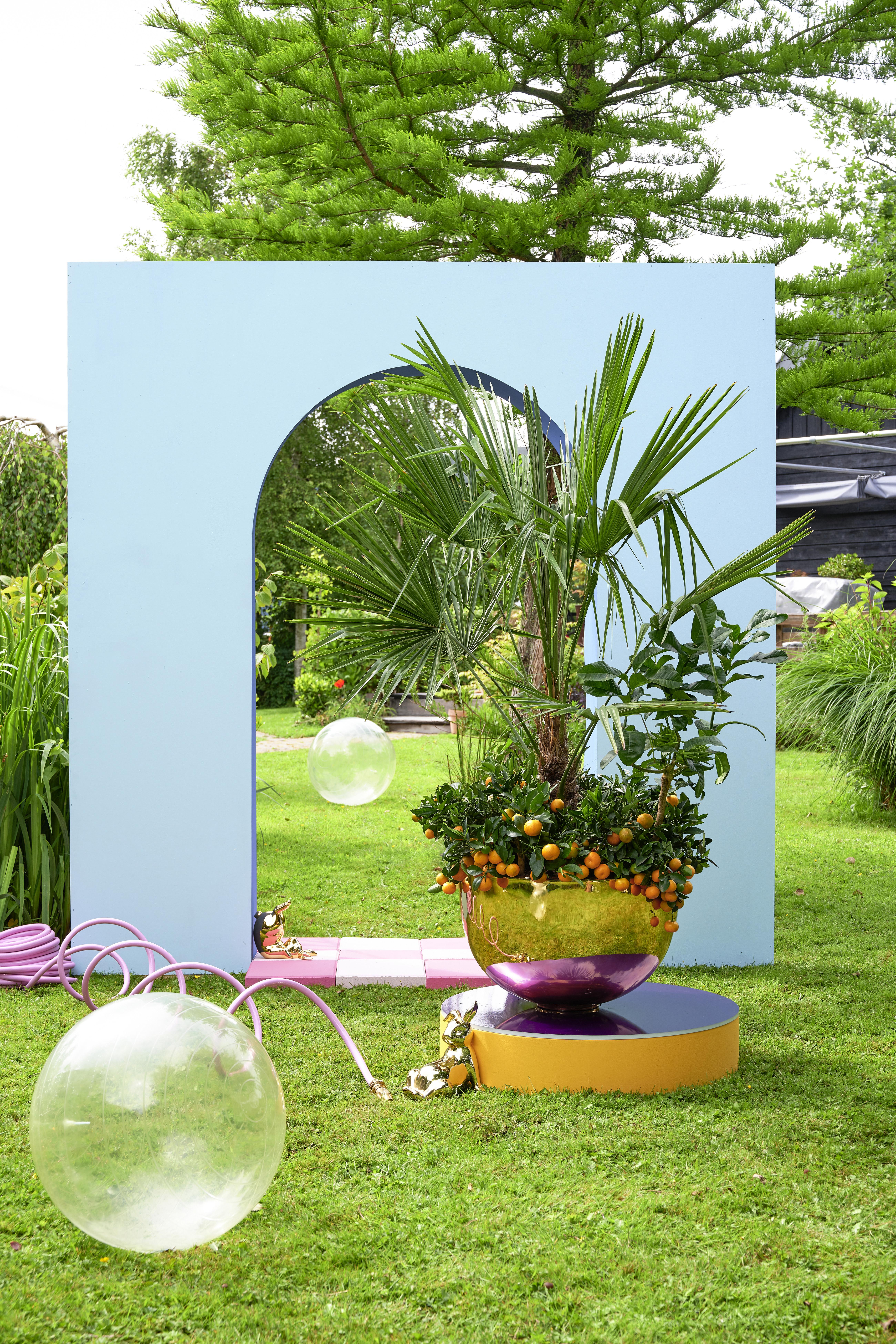 De buitenplanten uit De Trend Collectie lente/zomer 2021 Tuinpalmen