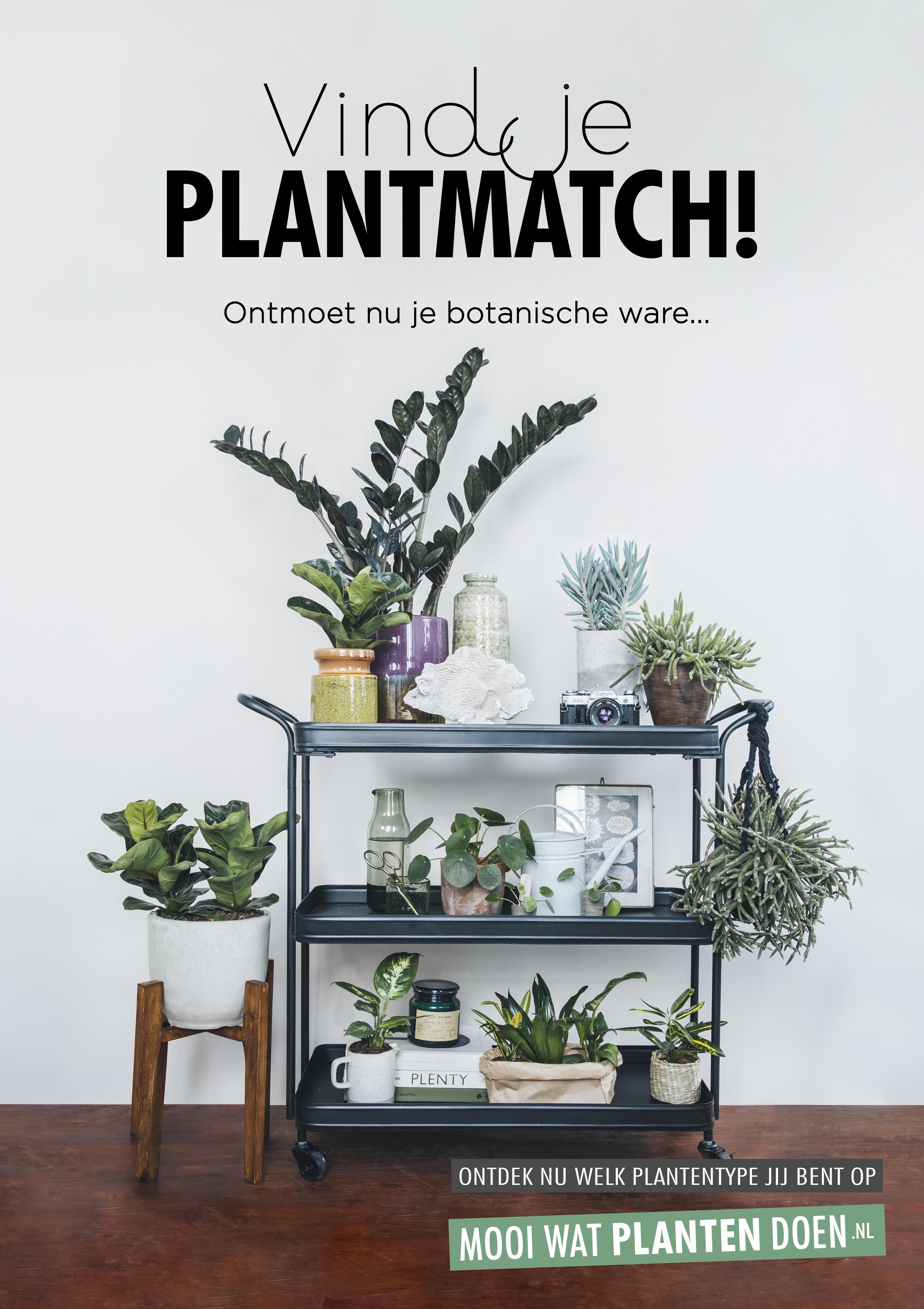 Vind je plantmatch: laat consumenten hun botanische ware ontdekken