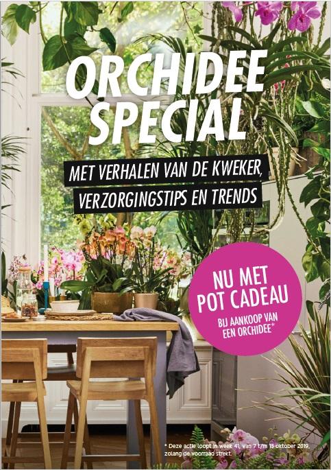 Orchidee special in Allerhande